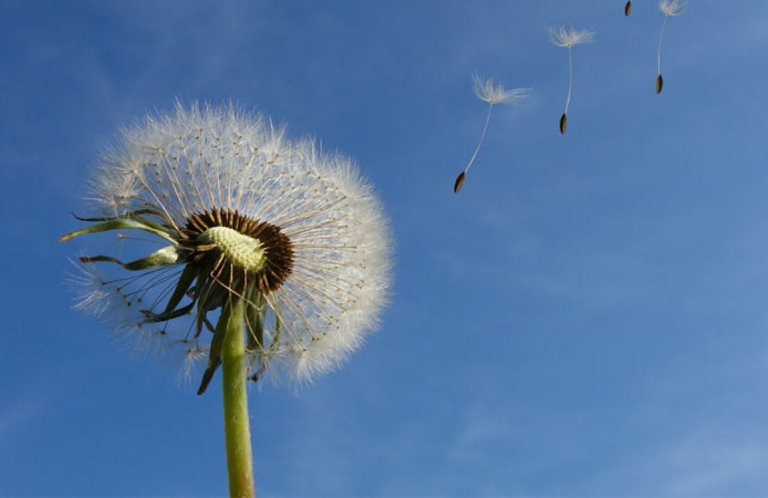 Remedios caseros para la alergia al polen
