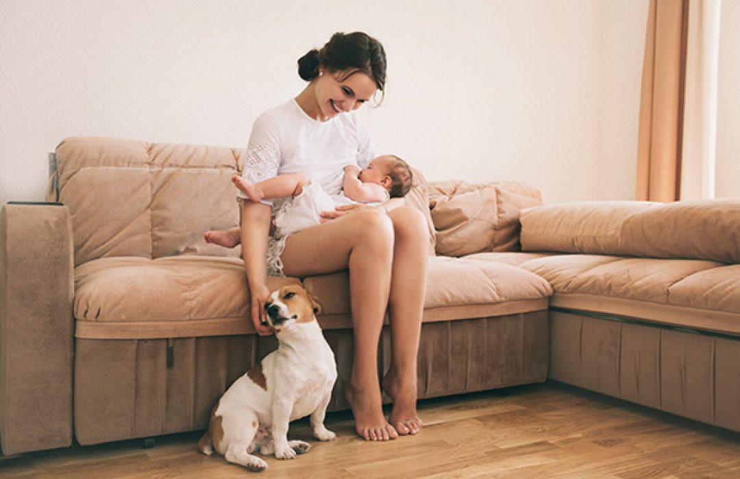 Preparar a una mascota para la llegada de un bebe